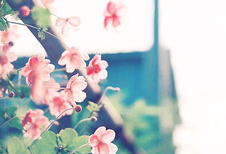 Pink Sweet Flower