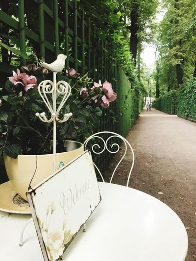 Plant Text Flower Nature Flowering Plant No People Tree Growth Western Script Table Front Or Back Yard Decoration Architecture Seat Beauty In Nature Empty Creativity Outdoors Day