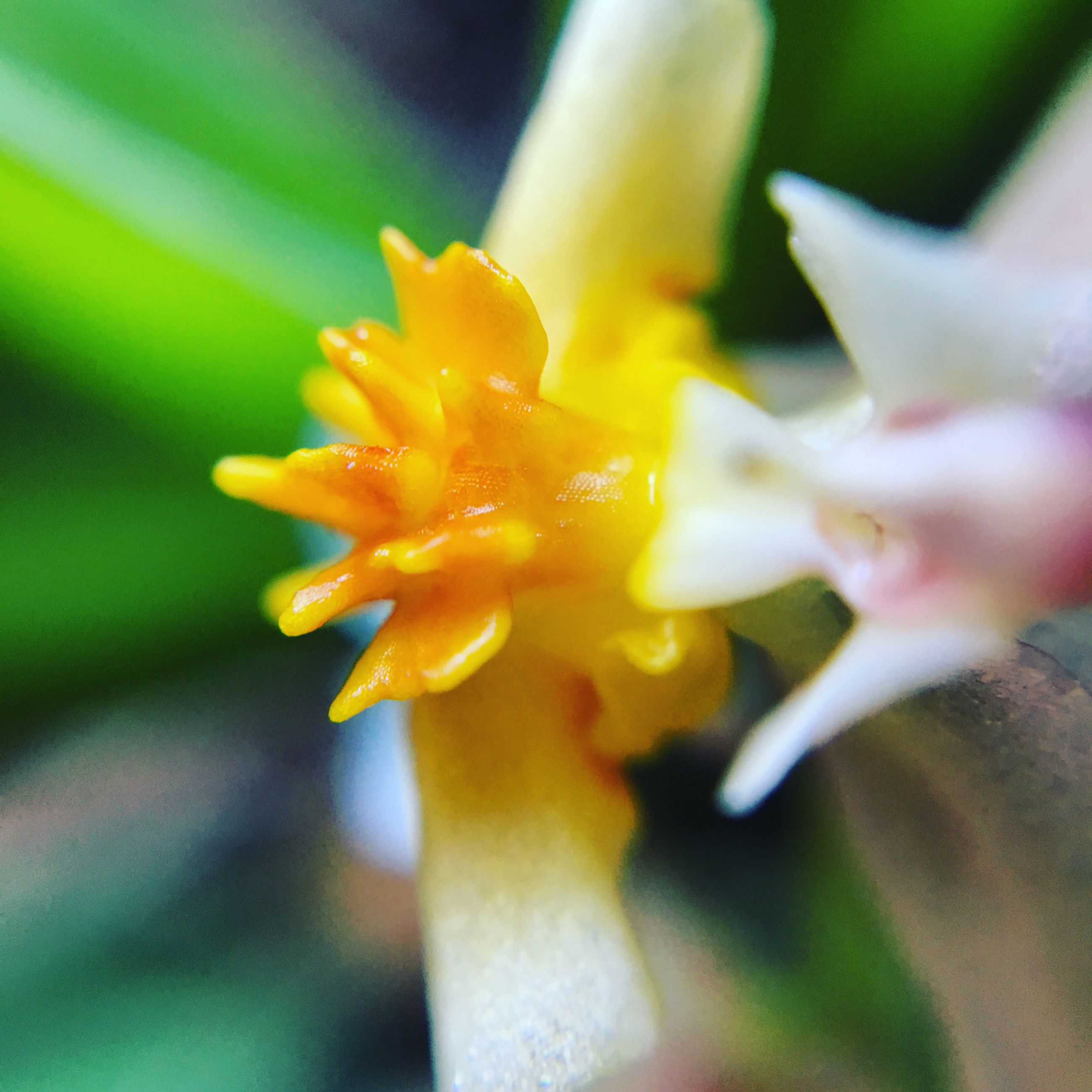 flower, petal, freshness, flower head, fragility, close-up, growth, focus on foreground, beauty in nature, single flower, blooming, nature, yellow, selective focus, pollen, plant, stamen, in bloom, blossom, park - man made space