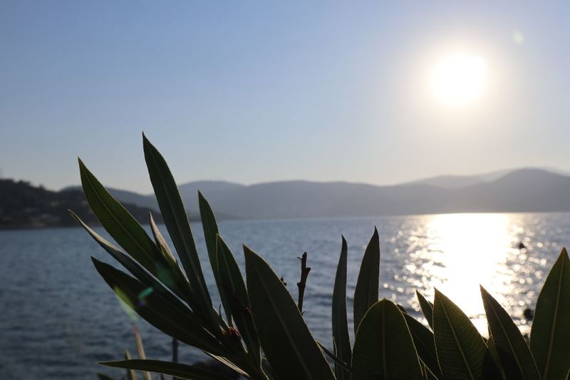 Sea Rixos Bodrum Water Sky Beauty In Nature Scenics - Nature Nature Tranquility Tranquil Scene Sun Beach Sunlight Leaf Growth Outdoors