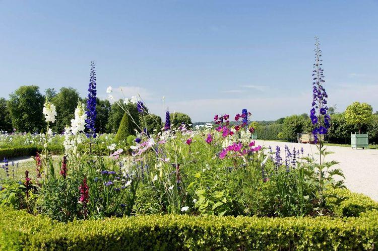 Flower Flowerbed Sky Grass Plant