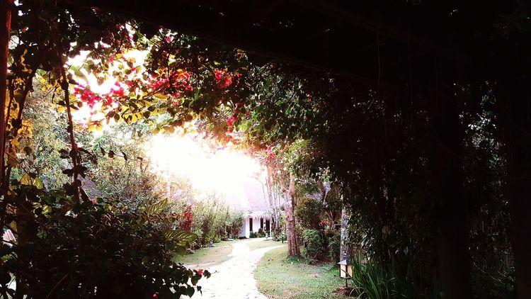Sunset at 6PM. Secret Garden Rejuvinating Relaxation Dethkattravels Wanderkat