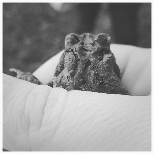 Frog Blackandwhite Photography Nature Animals Up Close Street