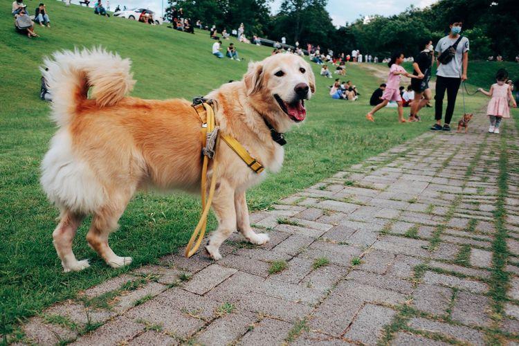 Dogs walking on footpath