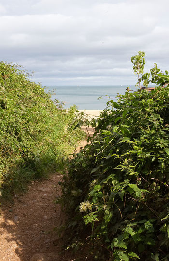 footpath onto