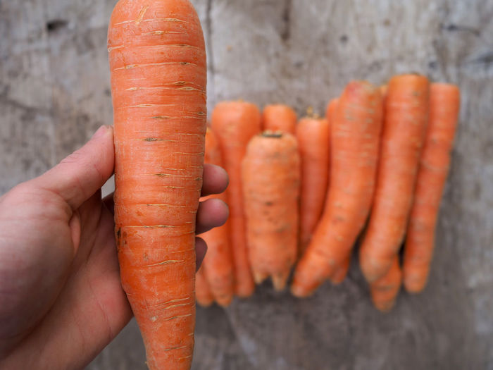 Cropped Image Of Hand Holding Carrot