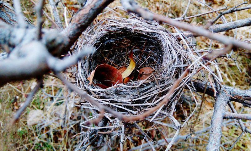 Iran / zanjan Iran Zanjan Tree Nature Bird Nest