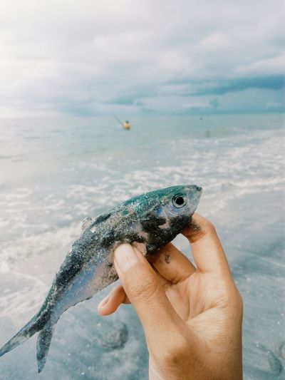 Close-up of man hand holding fish against sky