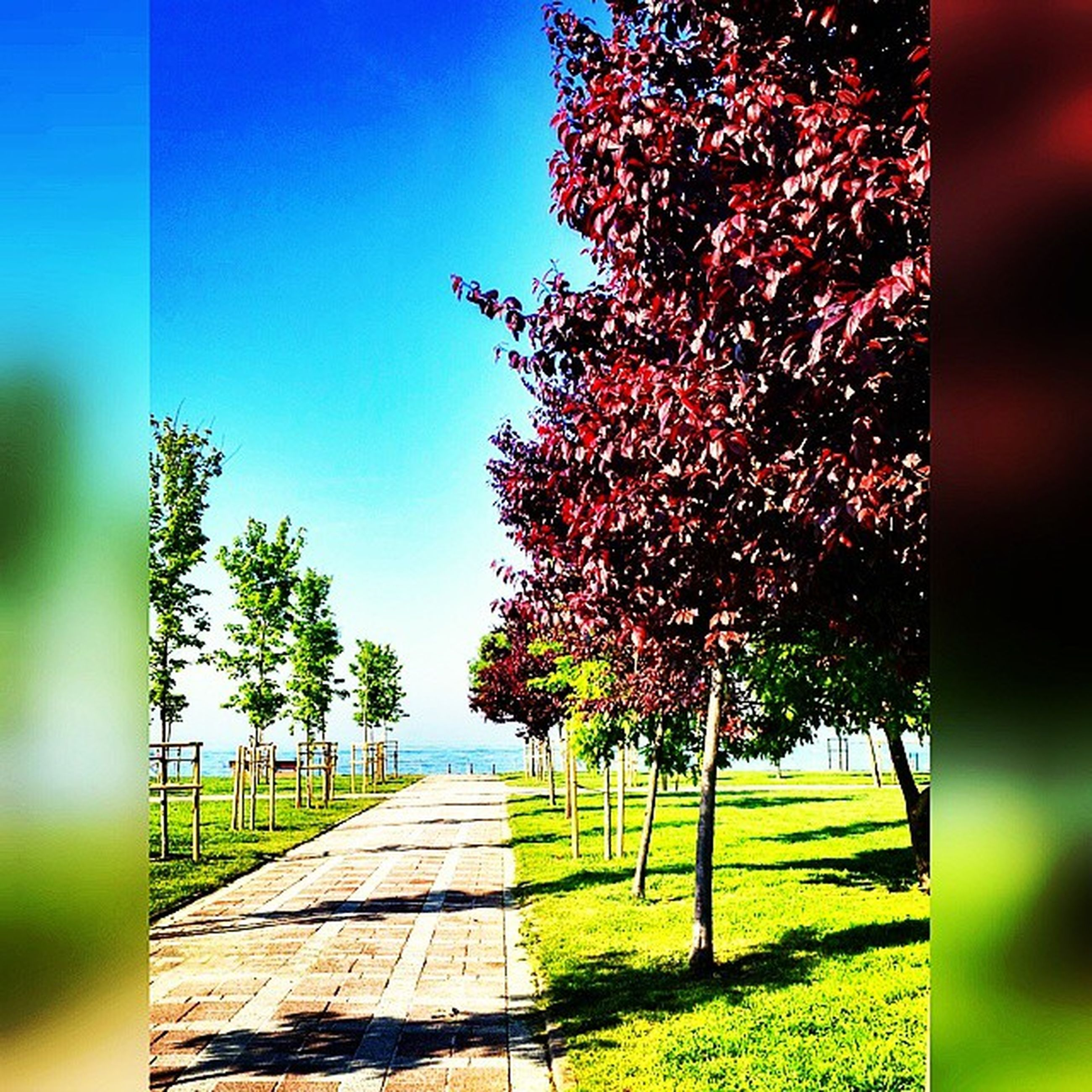 tree, growth, the way forward, grass, footpath, nature, tranquility, branch, park - man made space, sunlight, beauty in nature, green color, clear sky, walkway, tranquil scene, day, empty, field, plant, tree trunk