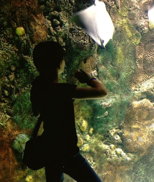 Henry Doorly Zoo Sea Life Sea Life Girl Child Aquarium Underwater