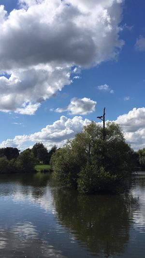 Cloud - Sky Sky Tree Water Day Tranquil Scene Tranquility River Outdoors Nature No People Beauty In Nature Cormorant