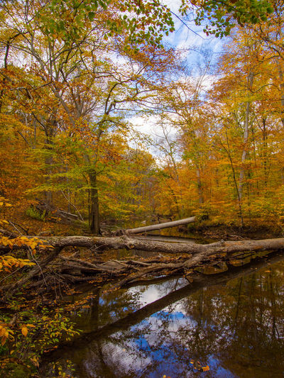 A view of the creek in autumn, Ridley Creek State Park, Pennsylvania. Creek Pennsylvania Autumn Beauty In Nature Branch Change Day Forest Landscape Leaf Nature No People Outdoors Reflection Ridley Creek State Pa Scenics Tranquil Scene Tranquility Travel Destinations Tree Tree Area Vacations Water Wilderness Area WoodLand