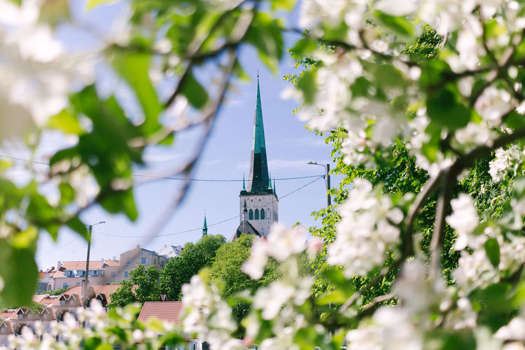 Old Town, Estonia Estonia Old Town Tallinn Architecture Belief Building Building Exterior Built Structure Day Focus On Background Green Color Growth Nature No People Outdoors Place Of Worship Plant Religion Selective Focus Spire  Spirituality Tower Tree