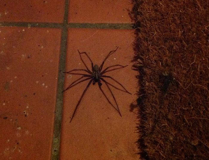 This lives on my doorstep!!! Spiders Fear Hateful Beasts Wish It Would Go Away!