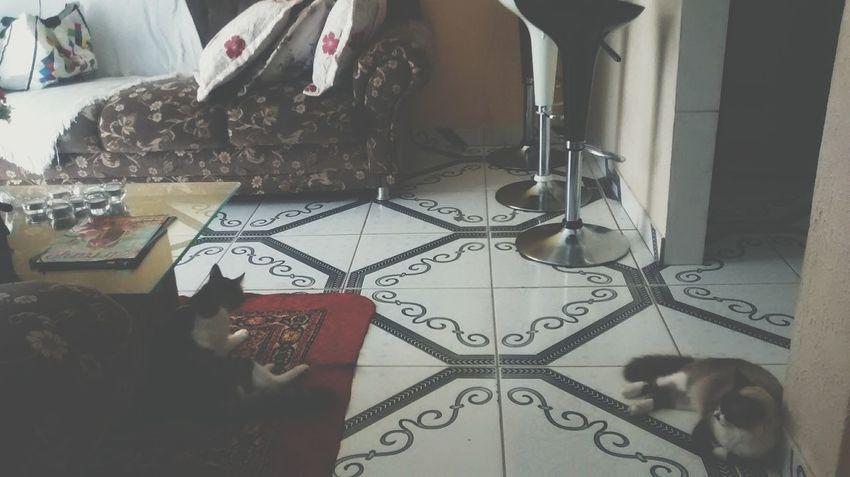 Cute Pets Cats Animals