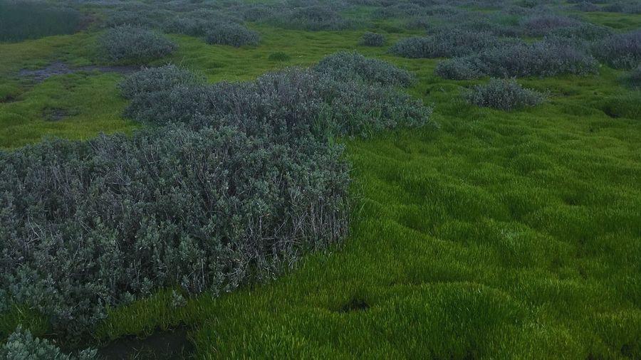 Texture Plant