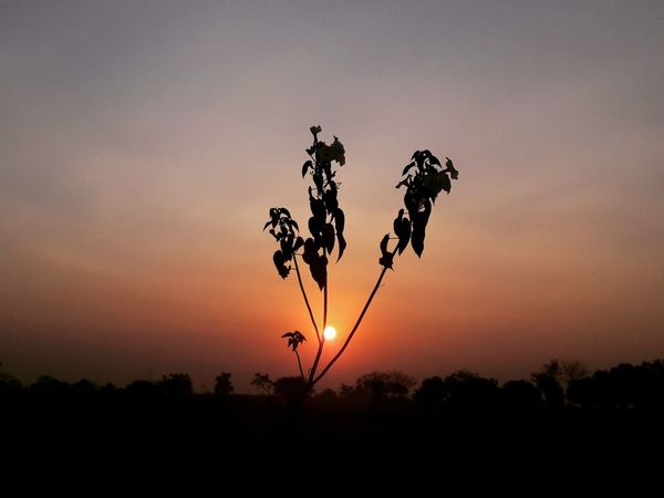 Friday morning Nature Sky Beauty In Nature Taking Photos Samsungphotography Sunset Sunrise Mobile_photographer Sky_collection Check This Out Sky Porn Sunrise_sunsets_aroundworld EyeEm Nature Lover EyeEm Gallery Nature Beauty In Nature Skylovers Beautiful Eyeemphotography First Eyeem Photo Gujarat India