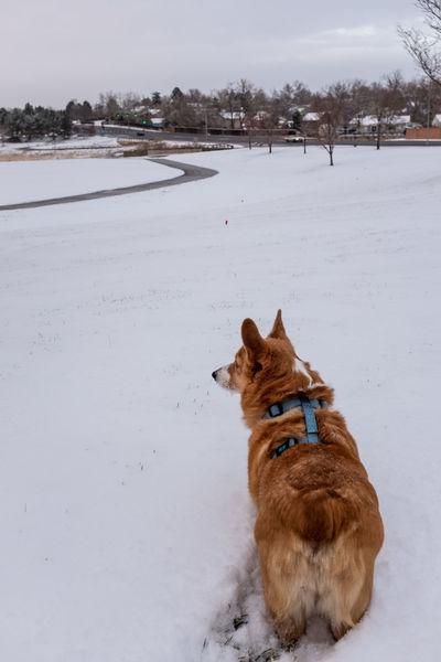 Snow Canine Dog Pets Vertebrate One Animal Animal Snowy Winter Public Park