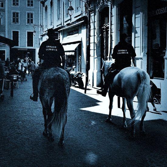 Horses Fashion Police