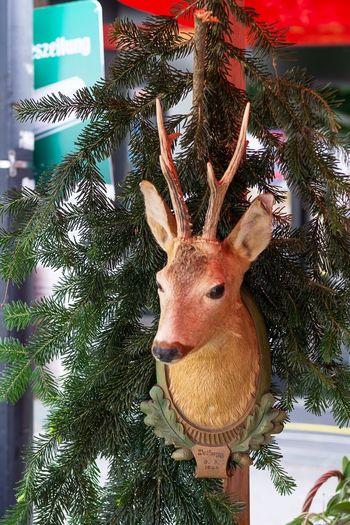 Trophäe der Jäger Carvingwood Carving Art Carving In Wood Carving Schnitzerei Art Fawn Rehkitz Trophäe Trophy Animal Animal Themes Deer Mammal No People Decoration Animal Wildlife Close-up Animal Head