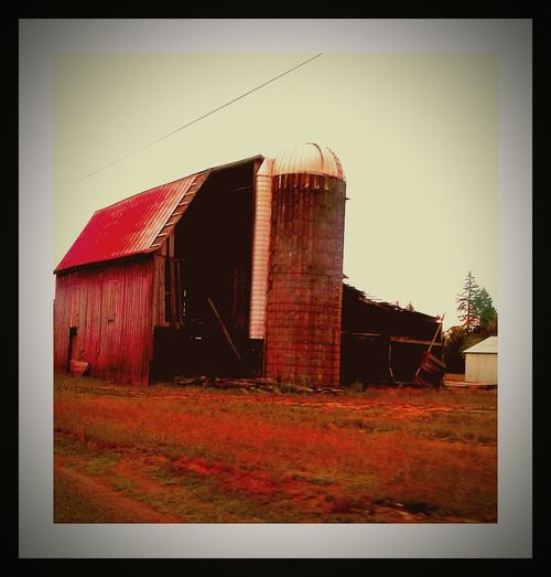 Red Barn Love Family Farm Old Barn Collection Falling Down Danger! Farmer In His Fields Farm Life Barney Red Color Drivebyphotography Fine Art Photography Yamhill County Goonie Boonie