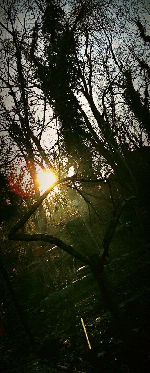 tree, sun, sunbeam, nature, lens flare, beauty in nature, tranquil scene, tranquility, branch, sunlight, growth, no people, scenics, sunset, outdoors, sky, low angle view, day