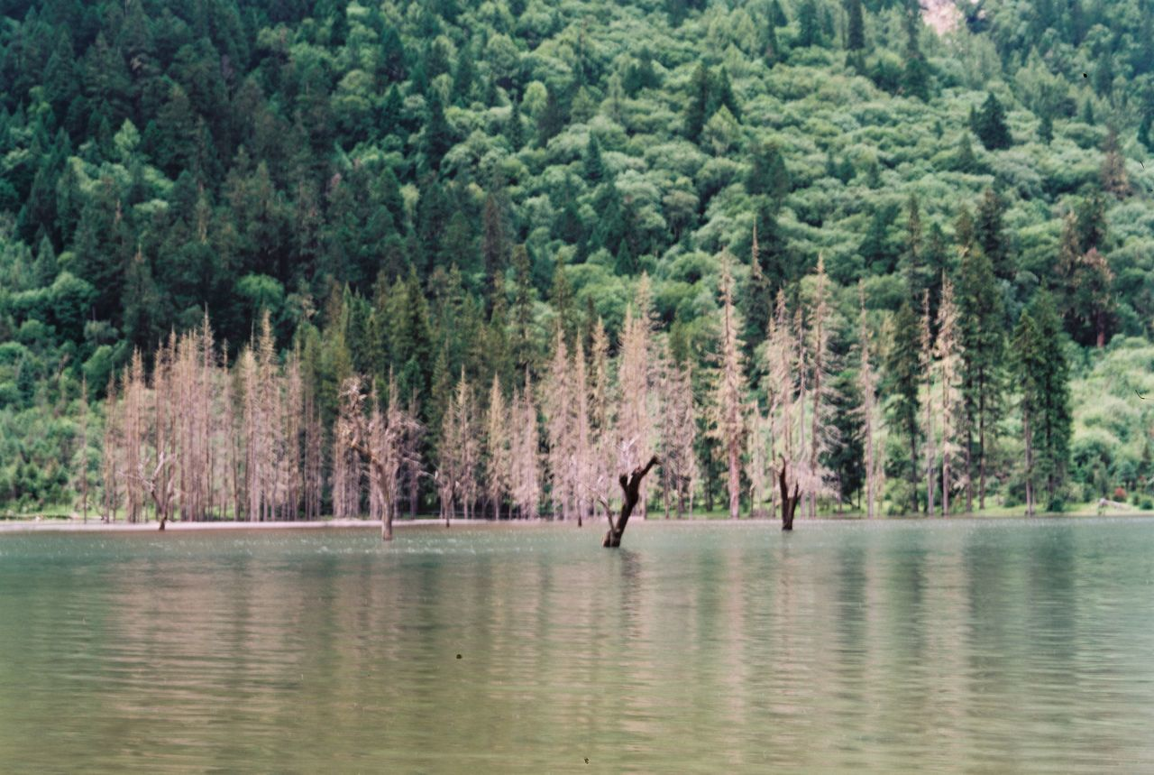tree, nature, reflection, forest, tranquility, scenics, beauty in nature, outdoors, water, day, adults only, adult, one person, people