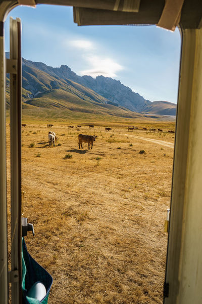 Gran Sasso D'Italia Animal Themes Campo Imperatore Cow Day Field Italy Landscape Mountain Nature No People Outdoors Sky An Eye For Travel Summer Road Tripping