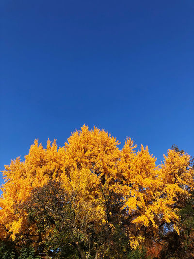 Low angle view of plants against sky during autumn