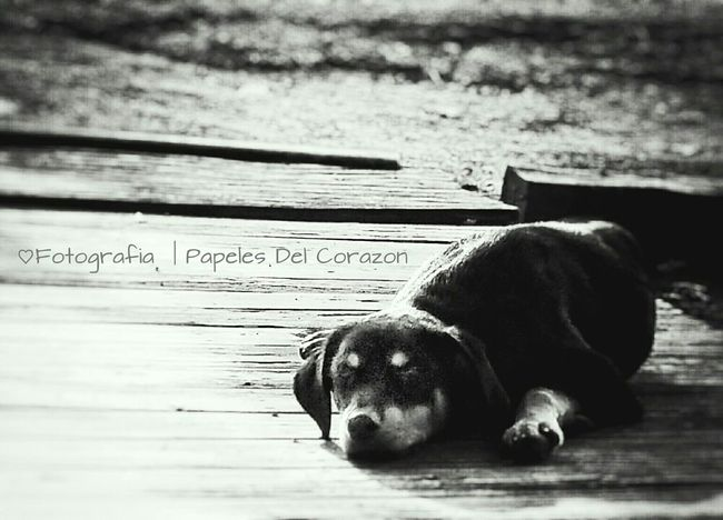 Dogs Of EyeEm Doggy Dogstyle Dog Dogslife Bw-collection