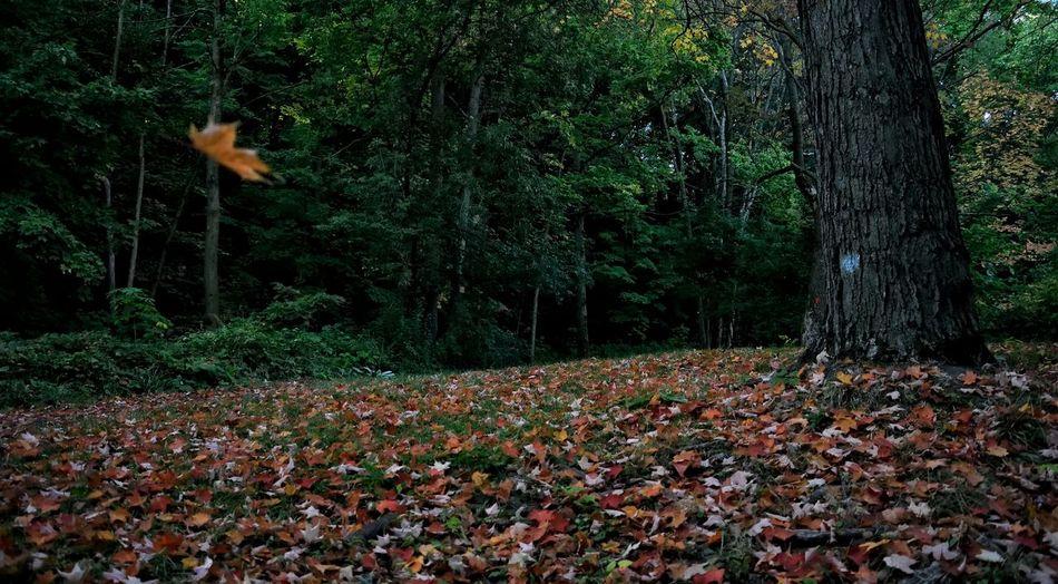 Fall Fallen