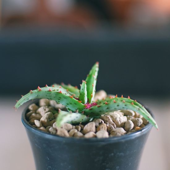 Close-up of potted plant in bowl