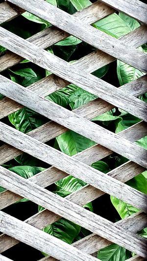 Wood Art Tree
