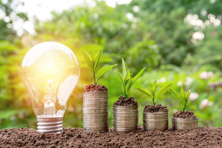 Beauty In Nature Close-up Container Day Electricity  Focus On Foreground Food Glass - Material Green Color Growth Illuminated Light Bulb Lighting Equipment Nature No People Outdoors Plant Potted Plant Selective Focus Transparent