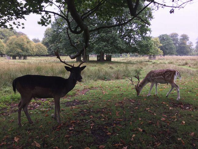 Plant Animal Animal Themes Tree Mammal Vertebrate Deer