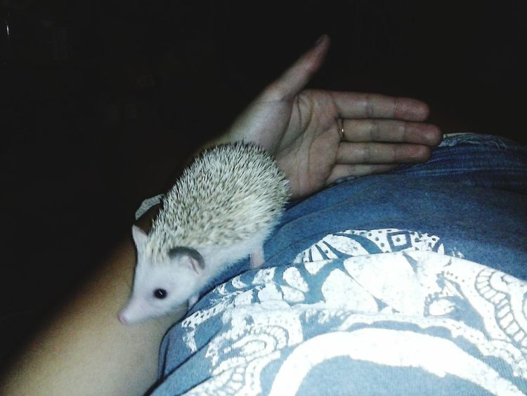 Sonic The Hedgehog Hedgehog Bby