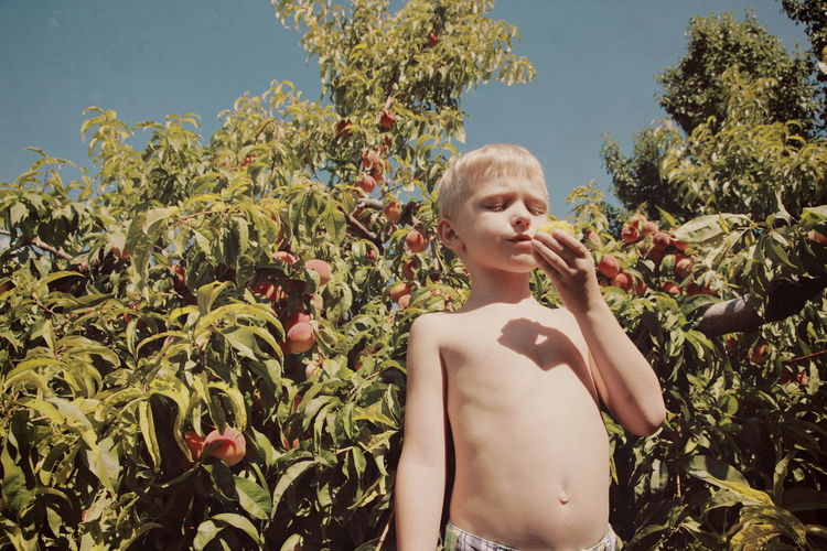 Low angle view of shirtless boy holding fruit while standing against peach tree