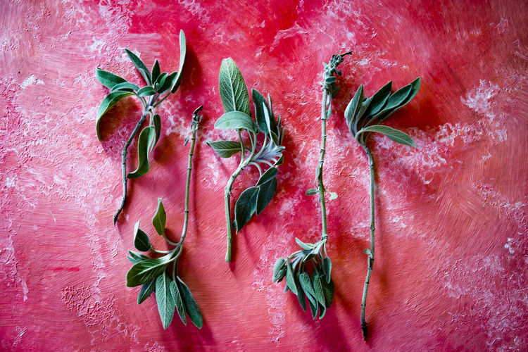 High angle view of herbs on red table