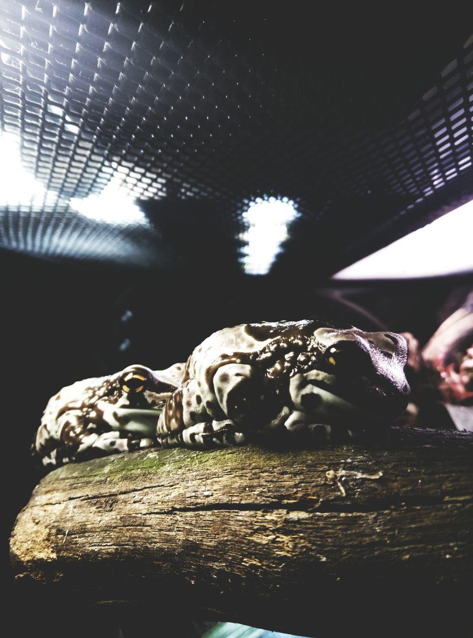 animal skull, animal themes, indoors, no people, skeleton, one animal, close-up, day