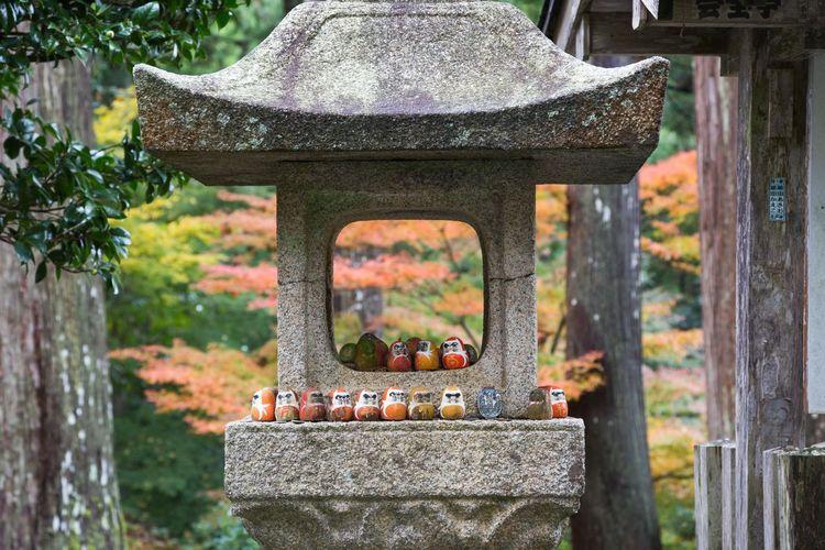明通寺 福井県小浜市 Autumn Autumn colors Fukui Prefecture Obama City Daruma Tree Front Or Back Yard Blooming Autumn Collection