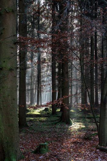 EyeEmNewHere Light Nature Tree Trees Day Forest Forest Photography Forest Trees Landscape Leafes Light And Shadow Lighting Nature No People Outdoors Ray Of Light Tranquility Tree