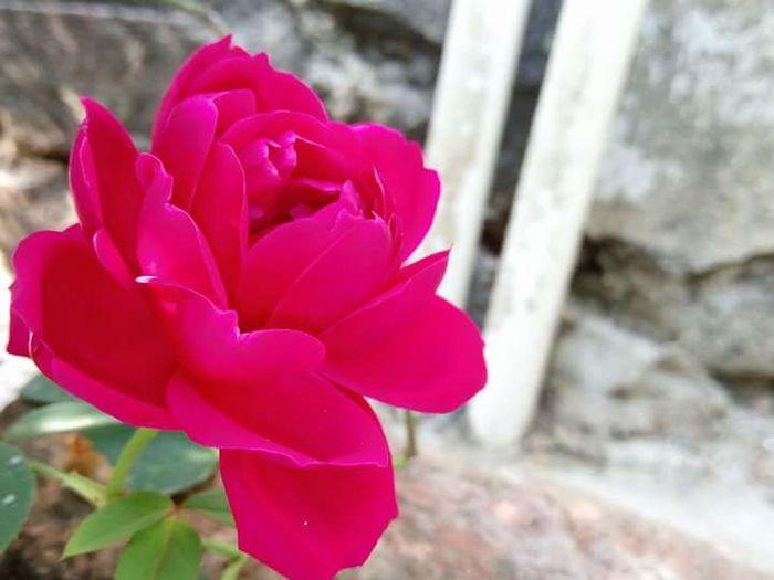 John's Flower Photography First Eyeem Photo