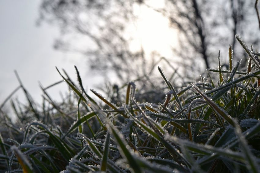 Cold Temperature Snow Frost Frozen Outdoors Beauty In Nature Good Bye Autumn The Places ı've Been Today Autumn 2016 Showcase November November2016 Sunbeam Beauty In Nature Bokeh Frog Perspective Low Angle View It Is Cold Outside Sky The Places I've Been And The Things I've Seen Good Morning World
