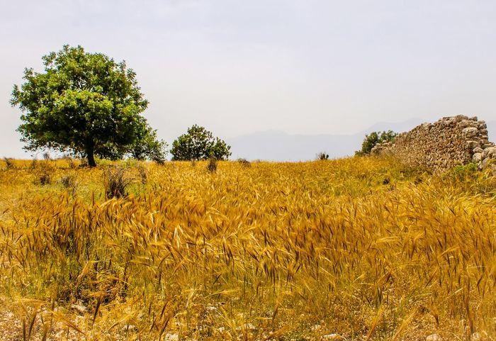 43 Golden Moments Fethiye Mugla Turkey Türkiye Yellow Blue Sky ForEyeEm New Photo 😚 If You Can,i Think You Should...