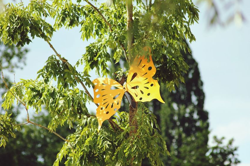 Decoration Papillon Photography
