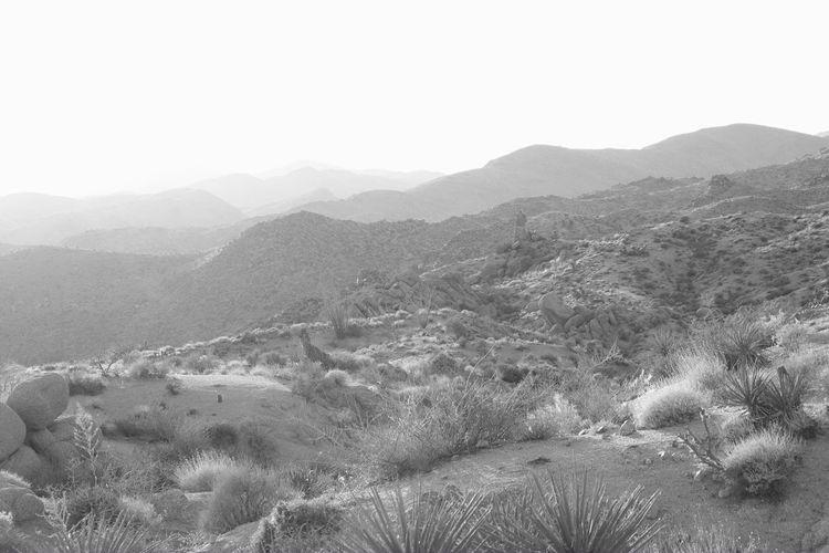 Black And White Landscape Colorado Desert Desert Joshua Tree National Park Mojave Desert Scenic Black And White California Desert California Nature Day Desert Beauty Landscape Nature Outdoors