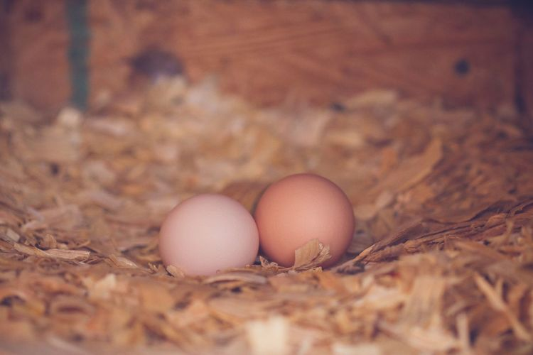 Eggs in farm