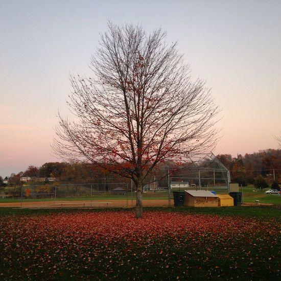 Leaves under the tree Leaves Autumn Leaves Autumn Colors Fall Leaves Tree ősz Toamnă🍁 Brown Brown Leaves Pretty Leaves Pretty Autumn First Eyeem Photo Circle Leaves