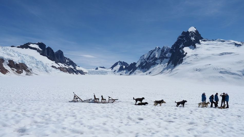 Dog sled adventure on Mendenhall glacier Panoramic Landscape Summer Alaska Juneau Mushing Mushers Glacier Outdoors Huskies Husky Mendenhall Glacier Snow Cold Temperature Winter Mountain Scenics - Nature Beauty In Nature Sky Environment Nature Mountain Range Snowcapped Mountain Winter Sport Non-urban Scene Day Landscape White Color Adventure Group Of People Leisure Activity The Great Outdoors - 2018 EyeEm Awards