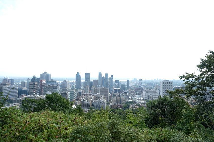 City Montréal Tree City View  Landscape Landscape_photography Landscapes Sky Tower Town